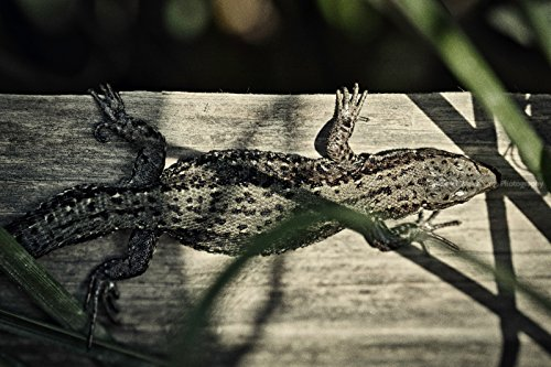 Lizard Vintage Photo Print, Strong Texture, Professional Photography Print, Nature Wallpaper, Paper &Canvas Prints, Reptile Photography (Lizard Metallic Print)