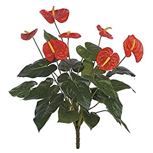 22 Inch Red Anthurium Bush Signature Foliage 19