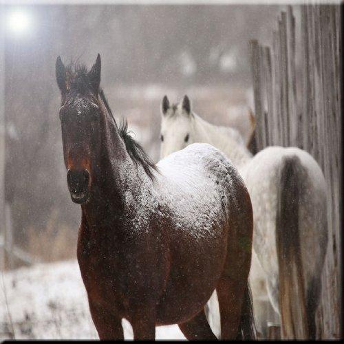 Rikki Knight Horse in Winter Snowstorm Design Ceramic Art Tile 12 x 12