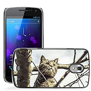Hot Style Cell Phone PC Hard Case Cover // M00115528 Cat Pride Nature Mackerel Pet // Samsung Galaxy Nexus GT-i9250 i9250
