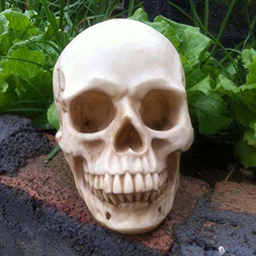 WINOMO Bucky Skeleton Human Skull Life-Size Halloween Props (Bucky Skeleton)