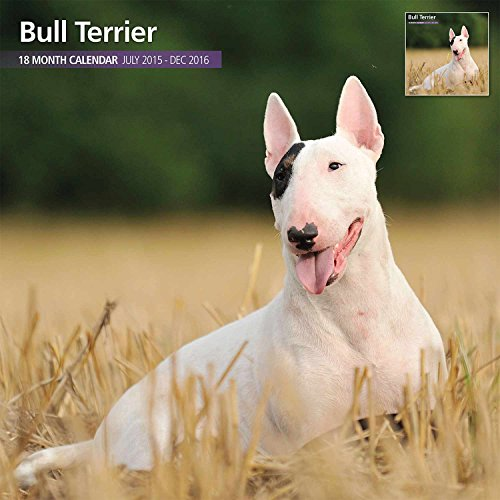 English Bull Terrier 18 Month 2016 Traditional Wall Calendar