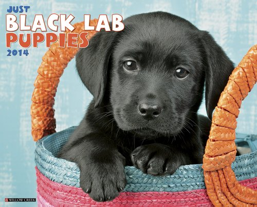 Just Black Lab Puppies - 7