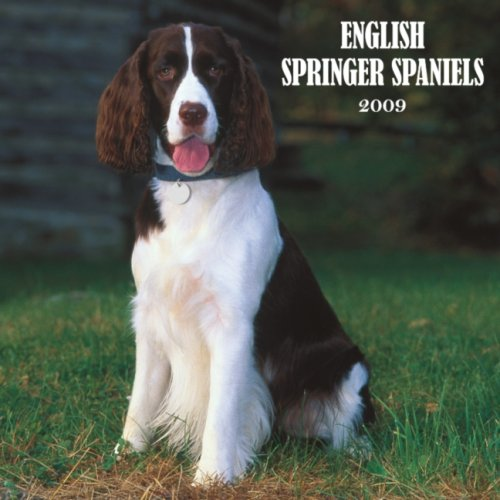 English Springer Spaniels 2009 Square Wall Calendar