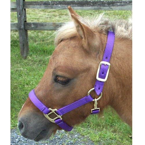 Intrepid International Nylon Miniature Horse Halter, Purple, Mini