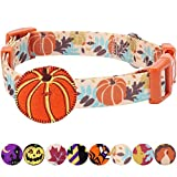 Blueberry Pet 8 Patterns Thanksgiving Fall Harvest Festival Pumpkin Designer Dog Collar with Decoration, Medium, Neck 14.5''-20'', Adjustable Collars for Dogs