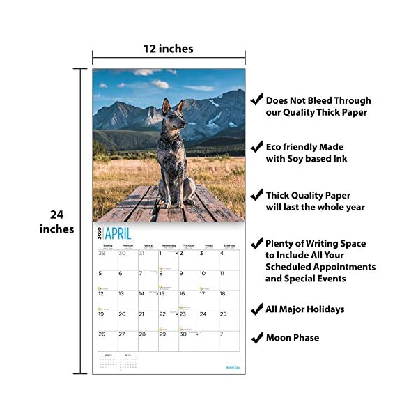 2020 Blue Heelers Wall Calendar by Bright Day, 16 Month 12 x 12 Inch, Cute Dogs Puppy Animals Australian Cattle Canine ACD Queensland Heeler 4