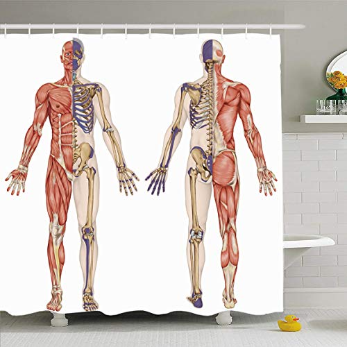 (Ahawoso Shower Curtain 66x72 Inches Bony System Anatomical Body Human Skeleton Anatomy Didactic Skeletal Science Hip Leg Model Acromion Waterproof Polyester Fabric Set with Hooks)