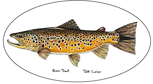 Fish Brown Trout - 5