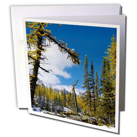 3dRose Danita Delimont - Trees - Opabin Plateau landscape, Yoho National Park, B.C., Canada - 12 Greeting Cards with envelopes (gc_257499_2)