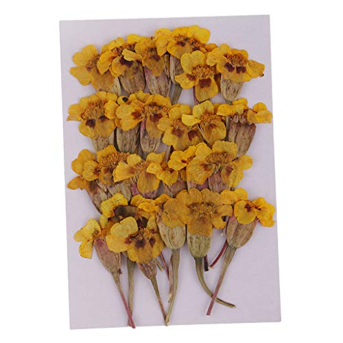 Fityle 24 Pieces Natural Real Dried Flower Maidenhair for DIY Necklace Pendants Charms Resin Casting Ornament Yellow