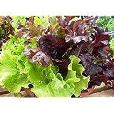Organic non-gmo Heirloom Super Gourmet Salad Blend Lettuce 100+Seeds mix of 5 kinds