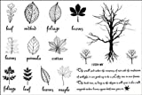 Fashion Male and female fake tattoos Watertight the English small trees leaf tattoo stickers by InterRookie