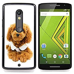 - Cute Puppy Dog Poodle/ Hard Snap On Cell Phone Case Cover - Cao - For Motorola Verizon DROID MAXX 2 / Moto X Play