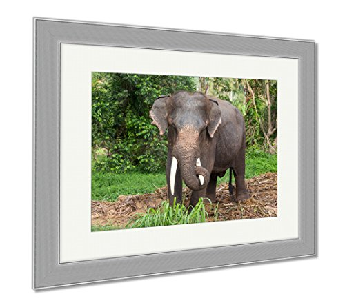 Ashley Framed Prints Thai Elephant In Jungle Island Koh Phangan Thailand, Wall Art Home Decoration, Color, 30x35 (frame size), Silver Frame, AG5257648 by Ashley Framed Prints