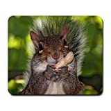 1 X Squirrel Nuts Large Mousepad Mouse Pad Great Gift Idea