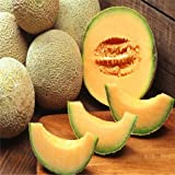 buy Hot Sale 50 Seasons cantaloupe melon seed sowing vegetable seeds fruit seed planting sweet crispy balcony free shipping now, new 2018-2017 bestseller, review and Photo, best price $4.88