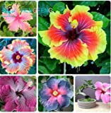 Mr.seeds On Sale!!! 200pcs Hibiscus seeds 24kinds HIBISCUS ROSA-SINENSIS Flower seeds hibiscus tree seeds for flower potted plants