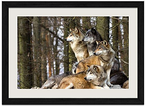 Framed Wolf Pictures (Wolf Pack - E - Art Print Wall Black Wood Grain Framed Picture(24x16inch))