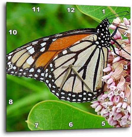 3dRose dpp_10930_2 Monarch Butterfly and Milkweed by Angelandspot-Wall Clock, 13 by 13-Inch