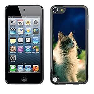 Super Stella Slim PC Hard Case Cover Skin Armor Shell Protection // M00145696 Cat Animal Feline Pet Cats // Apple ipod Touch 5 5G 5th
