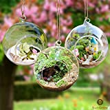 3 Hanging Glass Terrariums by SunGrow - Beautiful Spherical Air Plant Orb - Handmade, heat-resistant glass - Create refreshing atmosphere in Terrace Garden - For succulents, flowers & colorful stones