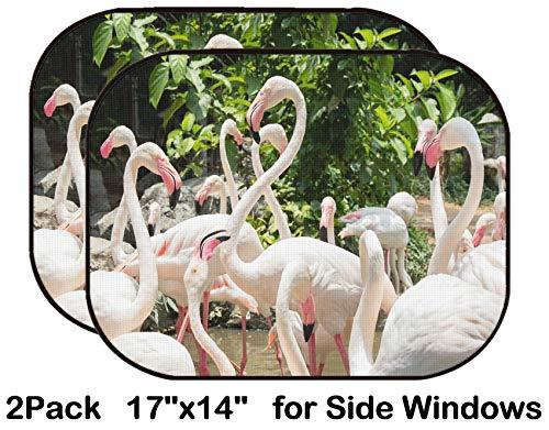 Liili Car Sun Shade for Side Rear Window Blocks UV Ray Sunlight Heat - Protect Baby and Pet - 2 Pack Image ID: 20239104 Flamingo in Zoo Chiang Mai (Chiang Mai Zoo)
