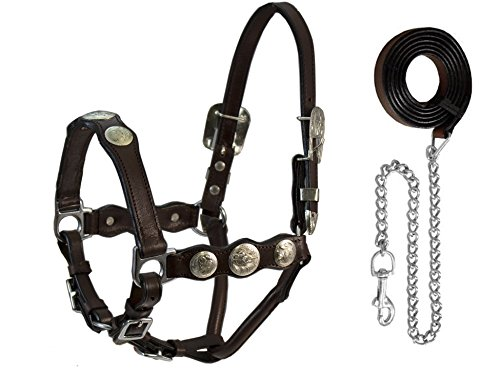 Derby Originals Tahoe Tack Silverado Round Concho Show Draft Horse Halter with Lead