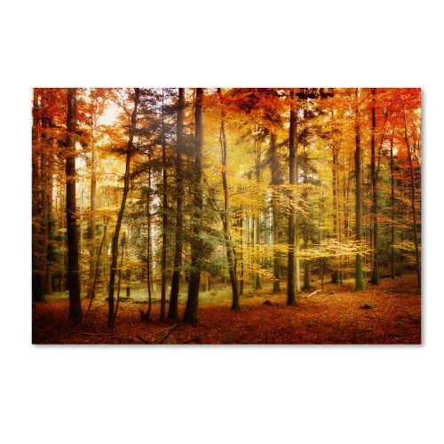 Brilliant Fall Color Artwork by Philippe Sainte-Laudy, 16 by 24-Inch Canvas Wall Art