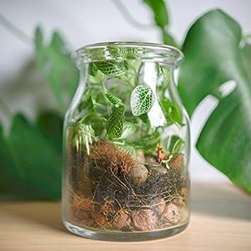 Minigarten Im Glas Kaufen