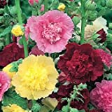 Outsidepride Hollyhock Carnival Mix - 1000 Seeds