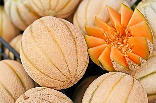 20+ ORGANICALLY GROWN Italian Arancino Melon Cantaloupe Seeds, Heirloom NON-GMO, Super Sweet and Fragrant, Productive and Dependable, From USA