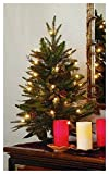 GKI Bethlehem Lighting 2-Foot Green River Spruce Christmas Tree Pre-lit with 35 Clear Mini   on a Plastic Tree Stand