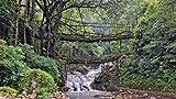 Nature Bridges