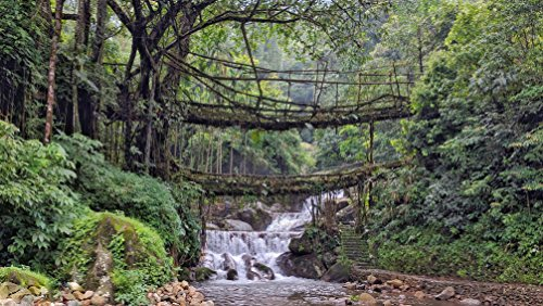 Nature Bridges by