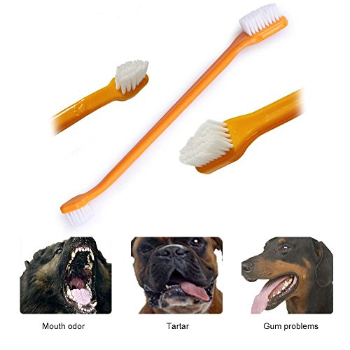 Amazon.com : Aolvo Dog/Cat Teeth Cleaning Kit, Pet Toothbrush and Toothpaste for Dog & Cat Small Breed, Dental Hygiene Kit (Include 2 Finger Toothbrush, ...