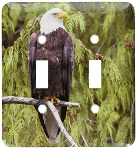 3dRose LSP_45624_2 Bald Eagle Perched in a Tall Tree.(Haliaeetus leucocephalus).Misty Fiord National Monument, Alaska Toggle Switch