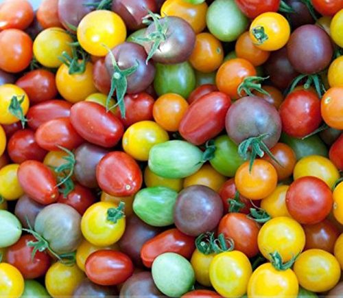 Mixed 20 Types Cherry Tomato Rare Heirloom Seeds, Professional Pack, 100 Seeds / Pack, Organic Vegetable Salad (Crestwood Salad)