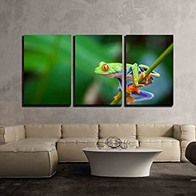 3 Piece Canvas Wall Art - Red Eye Frog on The Forest - Modern Home Art Stretched and Framed Ready to Hang - 24