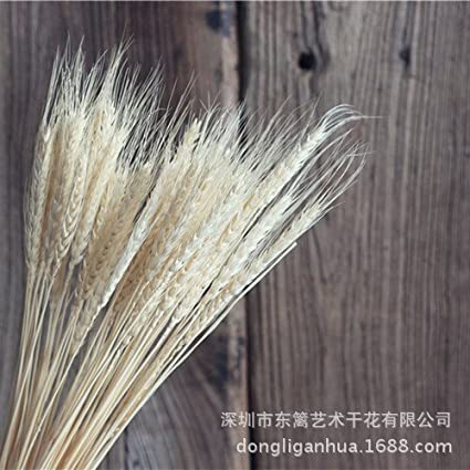 HUAYIFANG Garden Natural Plant Art Decorative Flower, Wheat Barley Shooting Props, Dried Flowers,White
