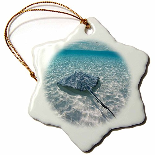 3dRose orn_73262_1 Cayman Islands Southern Stingray in Caribbean Sea Paul Souders Snowflake Decorative Hanging Ornament, Porcelain, 3-Inch