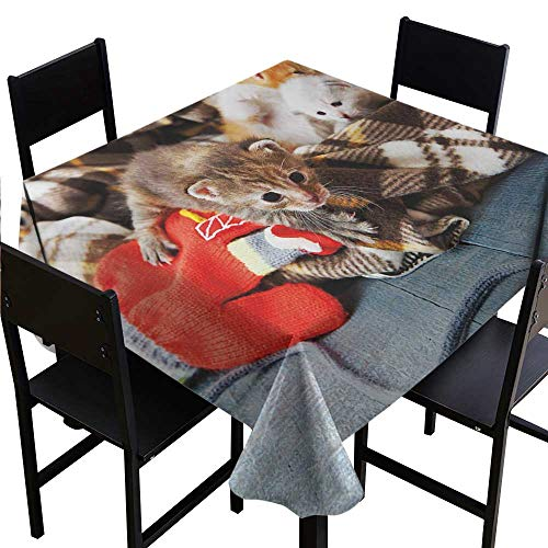 - Glifporia Microfiber Tablecloth Cats,Kittens and Mittens Newborns Baby Animals in an Plain Blanket Wood Play Toys Adorable,Multicolor,W50 x L50 Table Cloth Cover Wedding Event Party