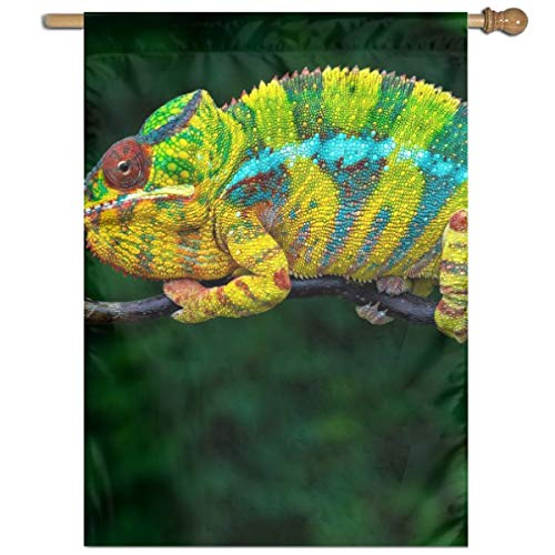 - YUANSHAN Single Print Home Garden Flag Colorful Chameleon Polyester Indoor/Outdoor Wall Banners Decorative Flag 27