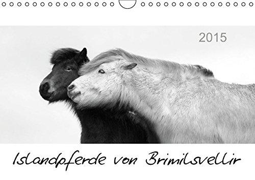 Islandpferde von Brimilsvellir (Wandkalender 2015 DIN A4 quer): Islandpferde von Brimilsvellir (Monatskalender, 14 Seiten) (CALVENDO Tiere)