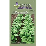 Garden America SPI-1275 Bloomsdale Spinach Seed