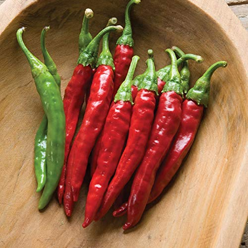 David's Garden Seeds Pepper Cayenne Red Rocket SL7577 (Red) 25 Non-GMO, Organic Seeds