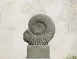 Campania International S-275-em Ammonite Statue, English Moss Finish