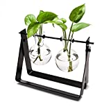 Mkono Plant Terrarium Stand Modern Tabletop Glass Planter Flower Bulb Vase with Metal Swivel Holder