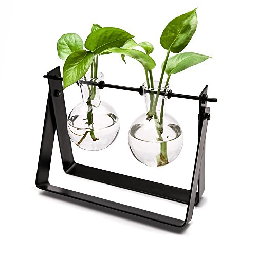 Mkono Plant Terrarium Stand Modern Tabletop Glass Planter Flower Bulb Vase with Metal Swivel Holder for Hydroponics Plants, Home Office Decoration