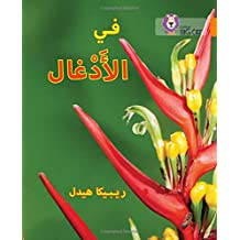 In the Jungle: Level 6 (Collins Big Cat Arabic Reading Programme)